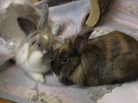Die Seite rund um das Haustier Kaninchen